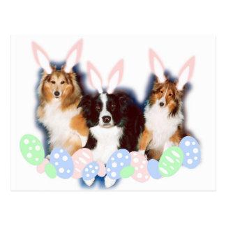 Cartão Postal Animais de estimação da páscoa