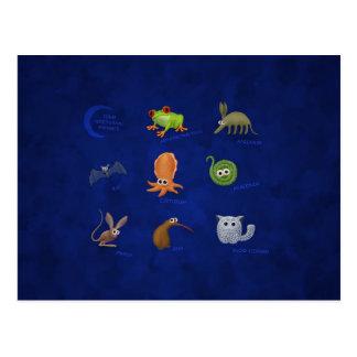 Cartão Postal Animais noturnos