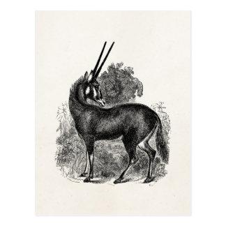 Cartão Postal Animais personalizados gazela do antílope do Oryx