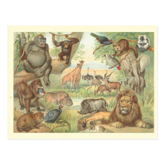 Cartão Postal Animais selvagens de África