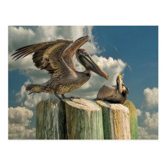 Cartão Postal Animais selvagens de Florida das paródias do