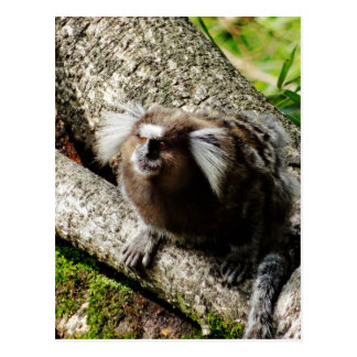 Cartão Postal Animais selvagens em Rio