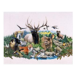 Cartão Postal Animais selvagens norte-americanos