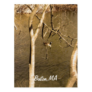 Cartão Postal Animais selvagens traseiros dos Fens da baía