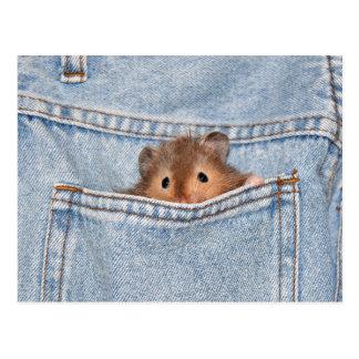 Cartão Postal Animal de estimação do bolso