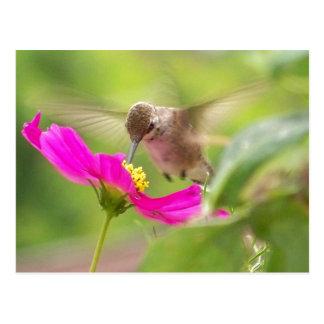 Cartão Postal Animal dos animais selvagens do pássaro do colibri