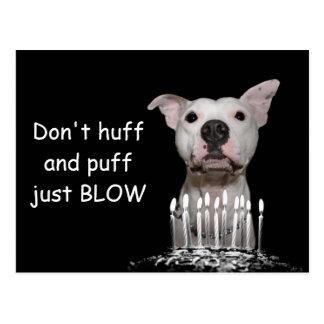 Cartão Postal Aniversário branco de Pitbull