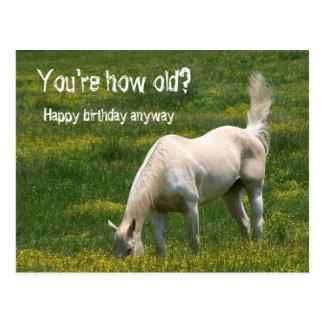 Cartão Postal Aniversário do cavalo