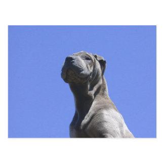 Cartão Postal Anos do cão…