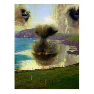 Cartão Postal Anseio península Dingle Irlanda