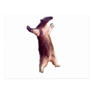 Cartão Postal Anteater