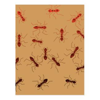 Cartão Postal Antics. da formiga