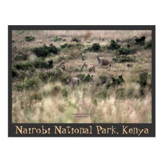 Cartão Postal Antílopes de Eland no parque nacional de Nairobi,