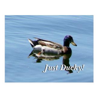Cartão Postal Apenas Ducky!