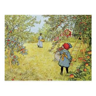 Cartão Postal Apple colhe
