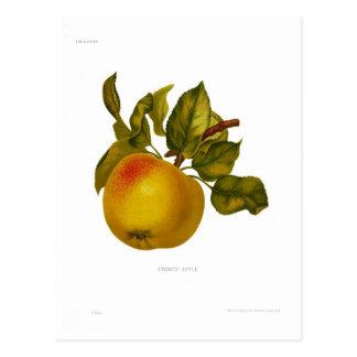 Cartão Postal Apple das pedras