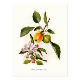 Cartão Postal Apple e flor