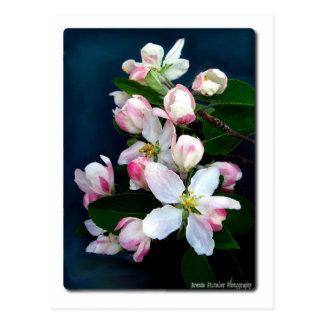 Cartão Postal Apple floresce ramo