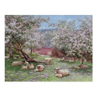 Cartão Postal Appleblossom