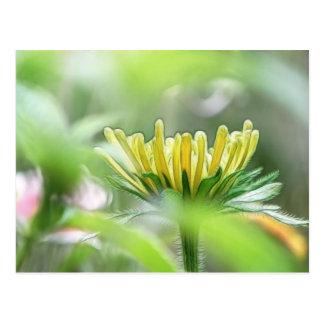 Cartão Postal Apronte para florescer - Rudbeckia