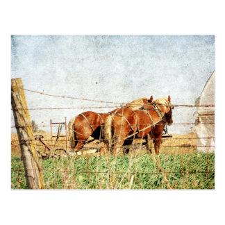 Cartão Postal Apronte para o trabalho, dois cavalos de esboço