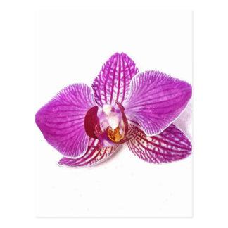 Cartão Postal Aquarel botânico floral do phalaenopsis do Lilac