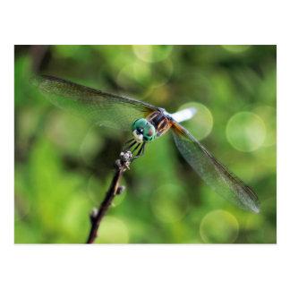 Cartão Postal Aqui está olhando-o libélula