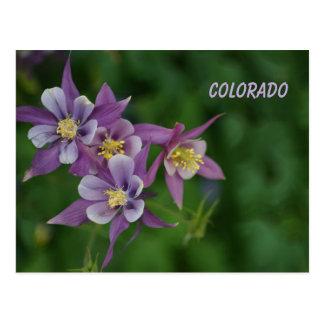 Cartão Postal Aquilégia azul de Colorado