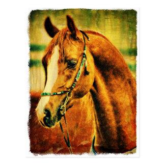 Cartão Postal Arabian bonito