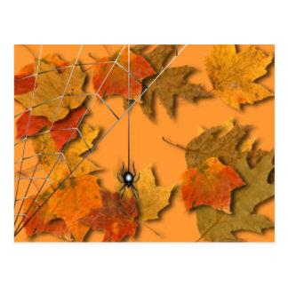 Cartão Postal Aranha