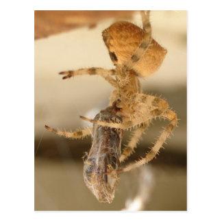 Cartão Postal Aranha da cara do gato que devora uma vespa