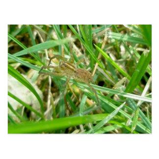 Cartão Postal Aranha de vagueamento na grama