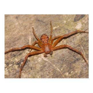 Cartão Postal Aranha do caranguejo