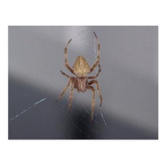 Cartão Postal Aranha do tecelão da esfera do jardim