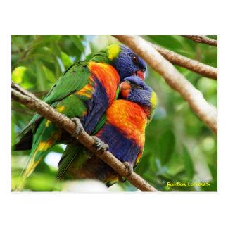 Cartão Postal Arco-íris Lorikeets