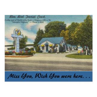 Cartão Postal Arkansas, corte de turista azul do pássaro