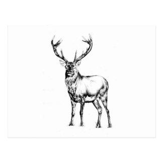 Cartão Postal Arte antiga do veado que tira a natureza handmade