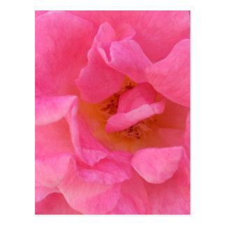 Cartão Postal Arte cor-de-rosa da pétala cor-de-rosa -