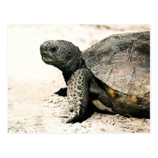 Cartão Postal Arte da tartaruga de Gopher