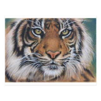 Cartão Postal Arte do animal dos animais selvagens do tigre