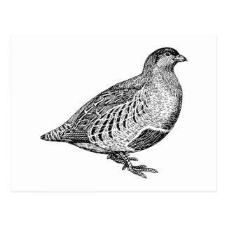 Cartão Postal Arte do pássaro da perdiz
