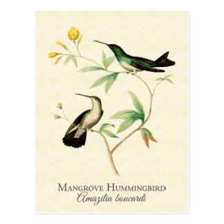 Cartão Postal Arte do vintage do colibri dos manguezais