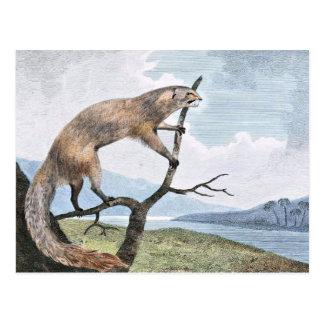 Cartão Postal Arte dos animais selvagens do Ichneumon (mangusto)