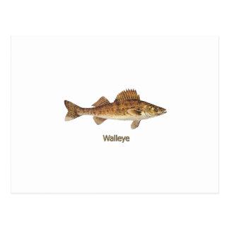 Cartão Postal Arte dos Walleye