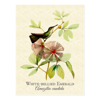 Cartão Postal Arte esmeralda inchada branco do vintage do