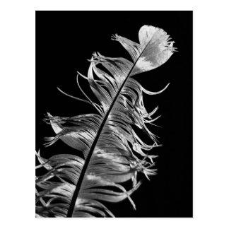 Cartão Postal Arte fotográfica preta & branca da pena