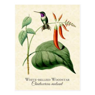 Cartão Postal Arte inchada branco do vintage do colibri de