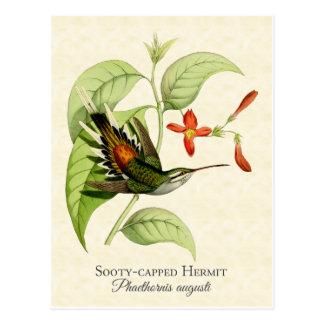 Cartão Postal Arte tampada Sooty do vintage do colibri do