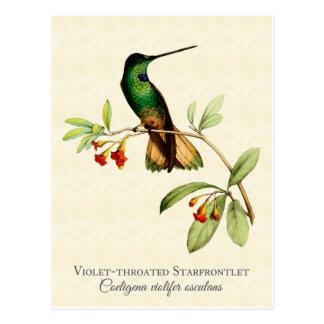 Cartão Postal Arte Throated violeta do vintage do colibri