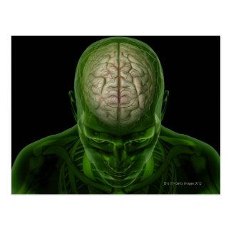 Cartão Postal Artérias do cérebro